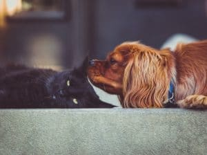 dog whispering to cat