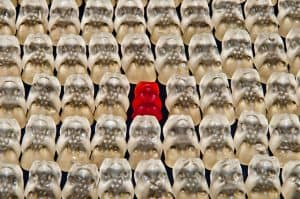 single red gummy bear in a sea of clear gummy bears