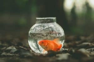 single goldfish in a round fishbowl in the middle of the forest