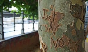 """Just say NO"" etched in tree"