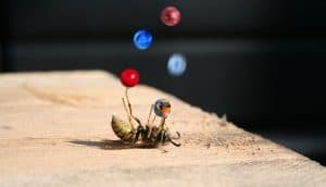 bee juggling 5 marbles