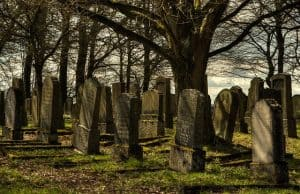 tombstones under a tree